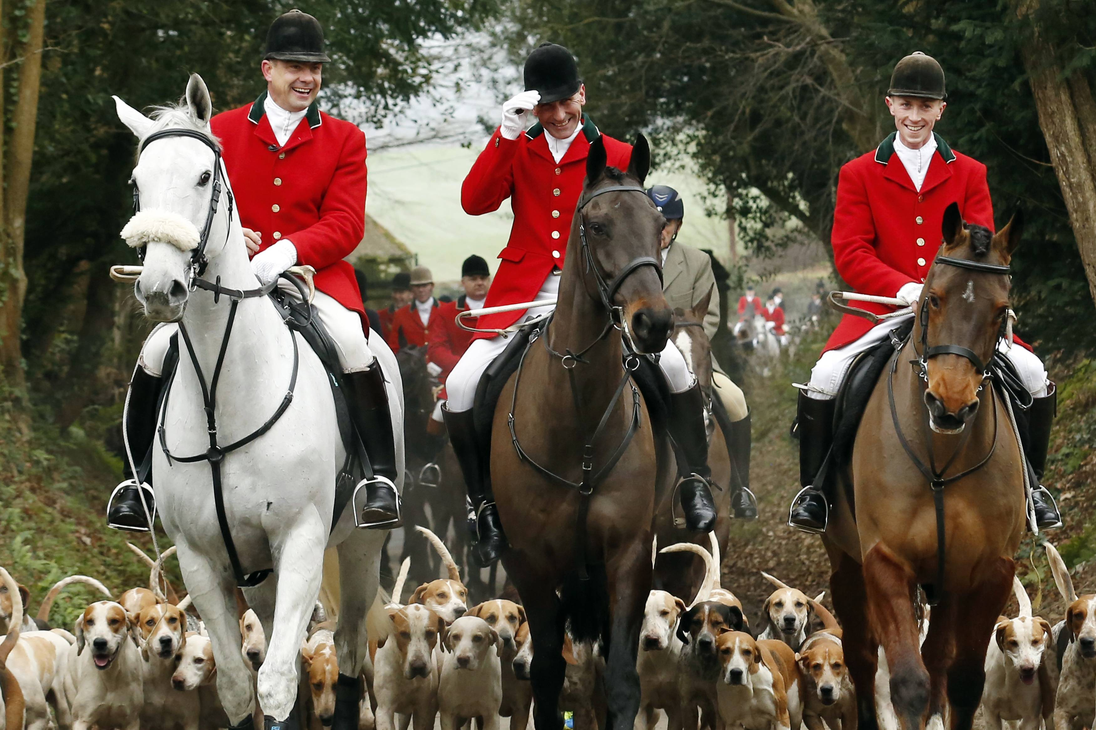 80% of Brits oppose fox hunting with hounds.