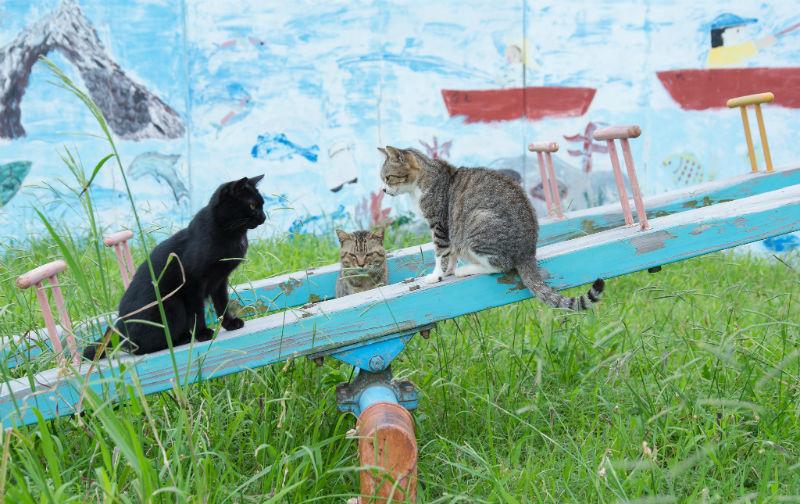Cat Heaven Island.jpg