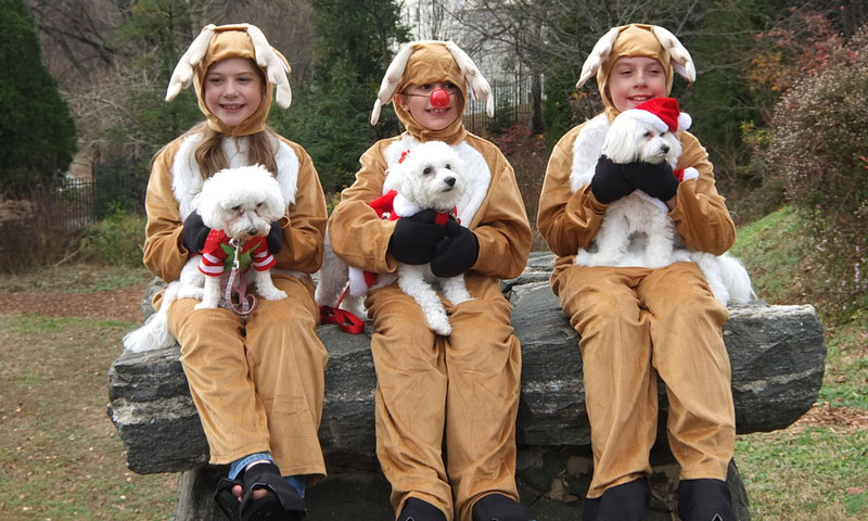 Get festive with your furriest friend at the Reindog Parade.