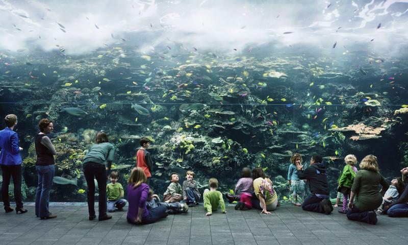 Thomas Struth's Georgia Aquarium photo is on exhibit at the High Museum.