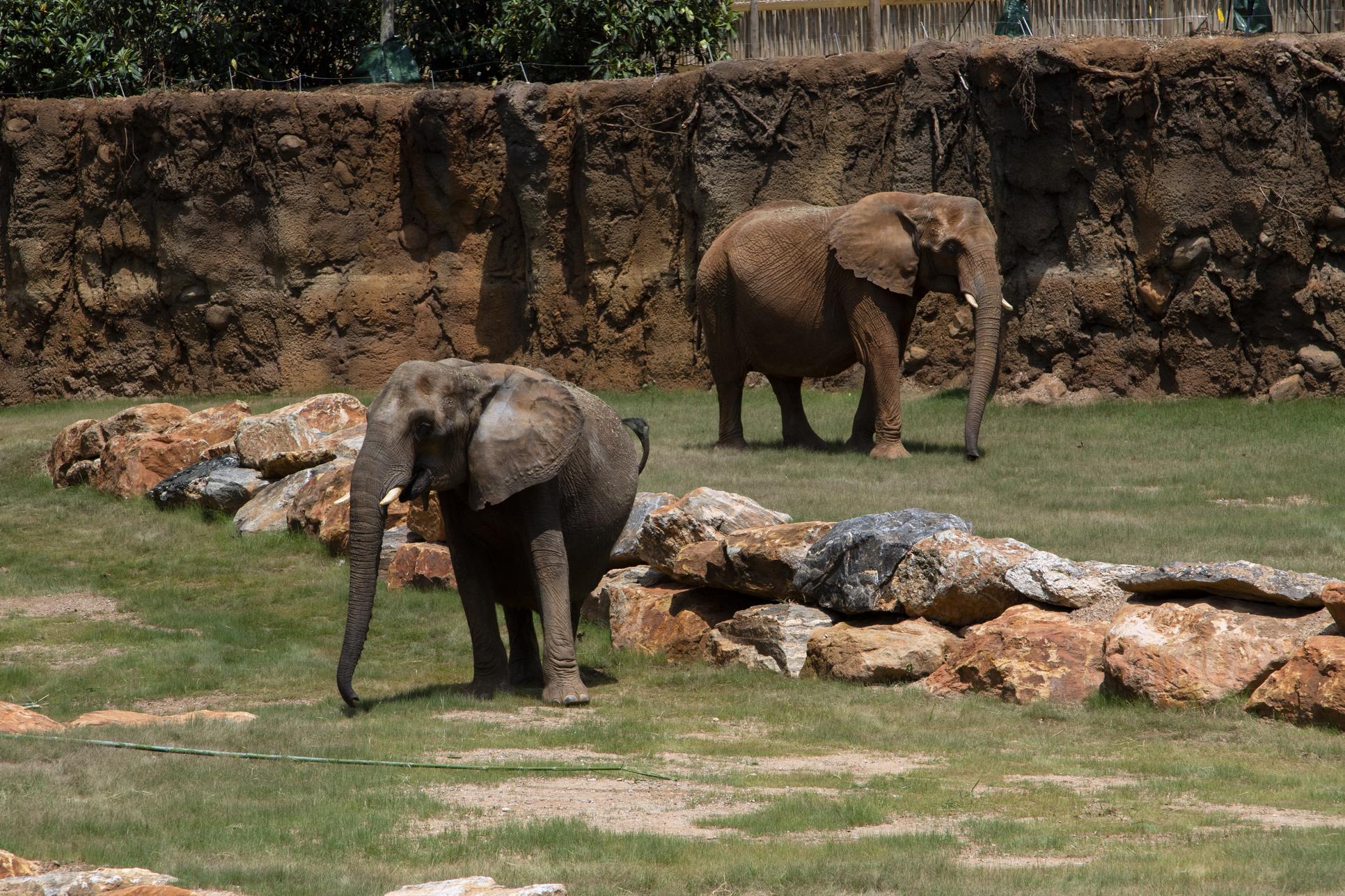 Elephants - Zoo Atlanta