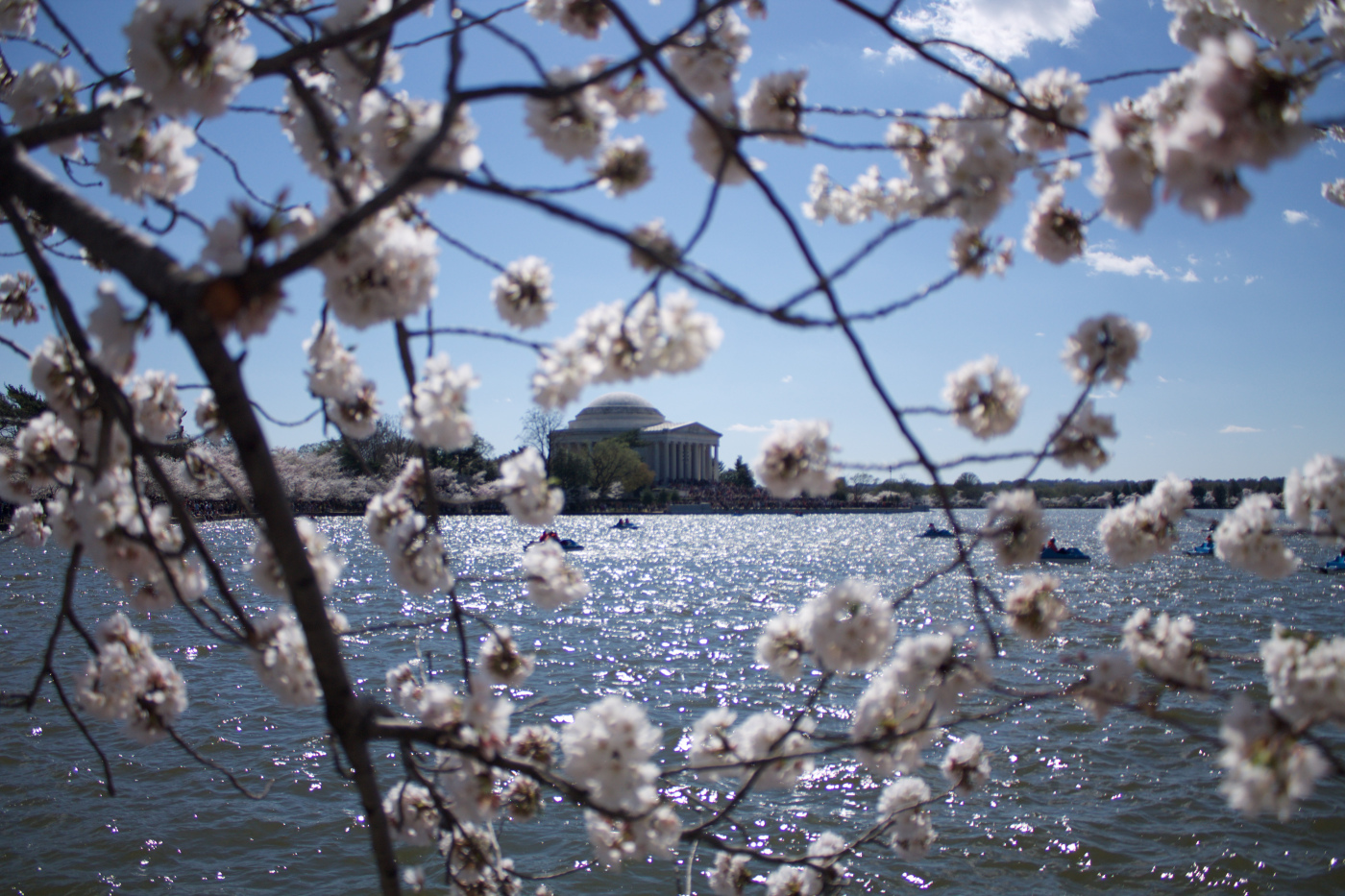 washington-dc-cherry-blossoms.jpg