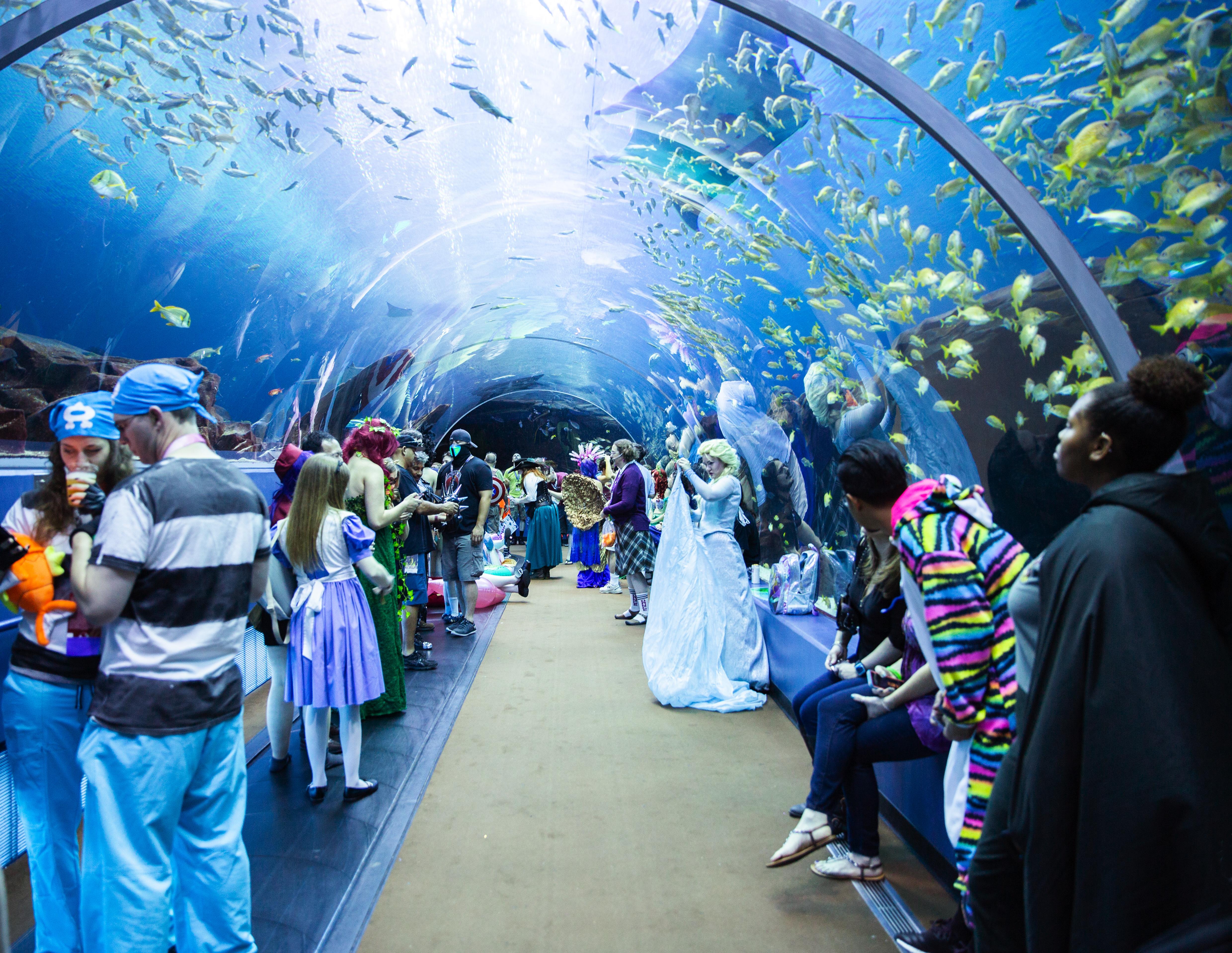 Dragon Con Night at Georgia Aquarium