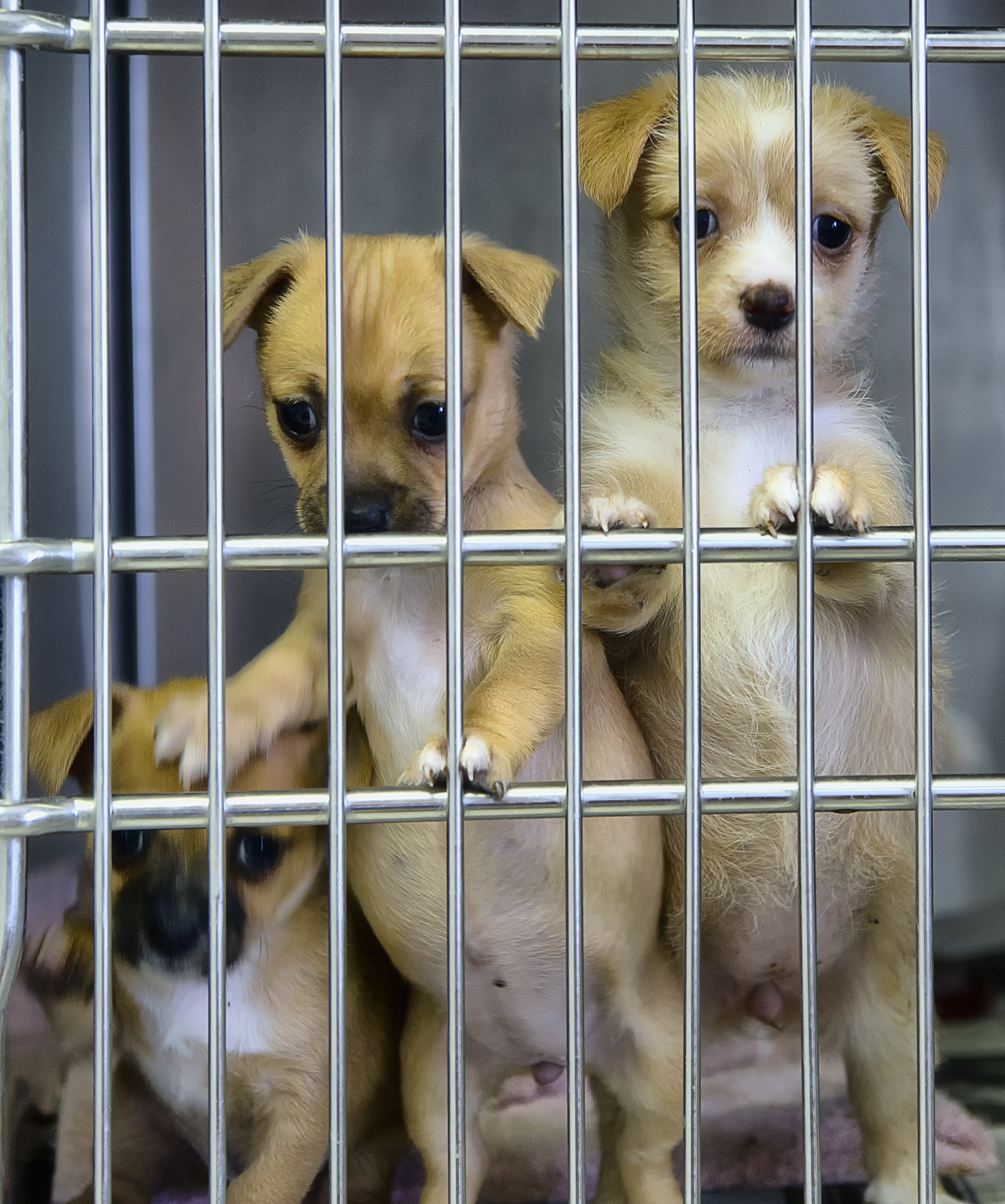 Why do animal charities get so many donations?